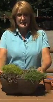 Diane from Edward's Garden Center on WNEP's Home and Backyard